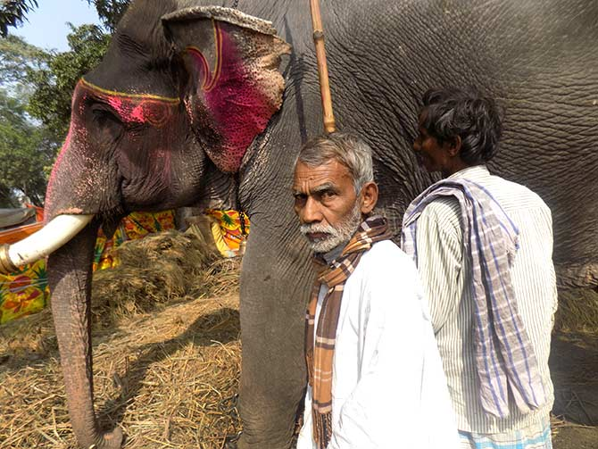 JD-U MLA Shyam Bahadur Singh was accompanied by his elephant, Gaman.