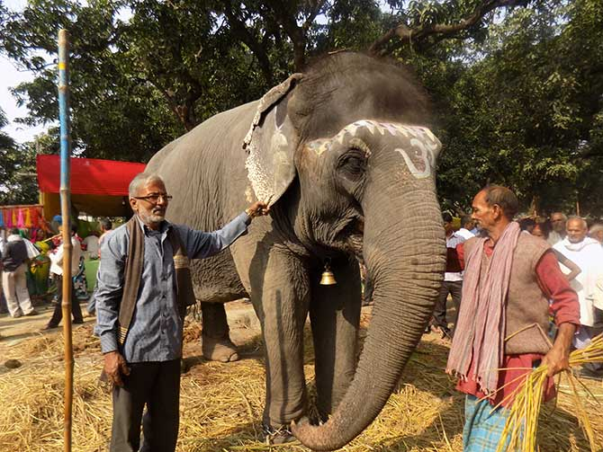 Sanju Singh poses for a picture with his elephant, Gulabi.