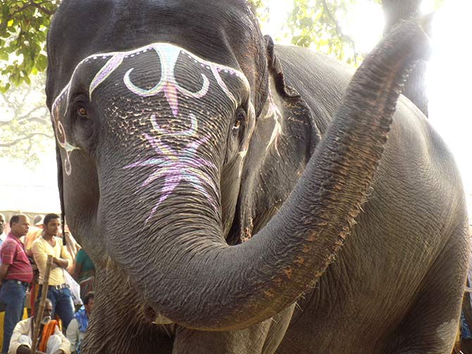 An elephant at the Sonepur Cattle Fair