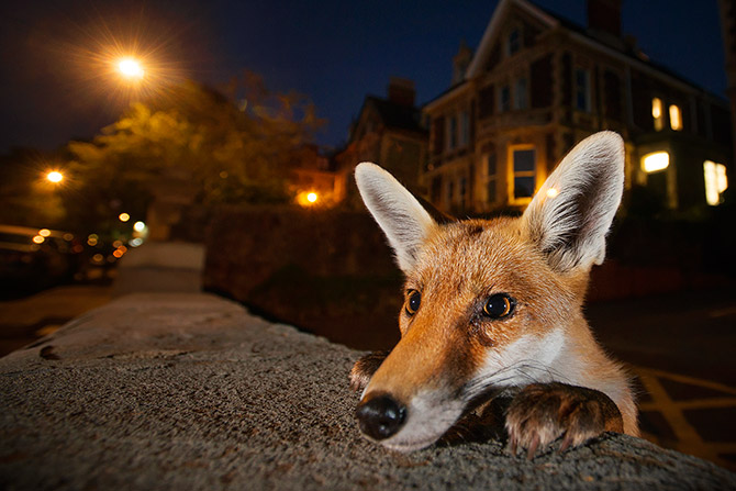 India News - Latest World & Political News - Current News Headlines in India - What did the fox say?