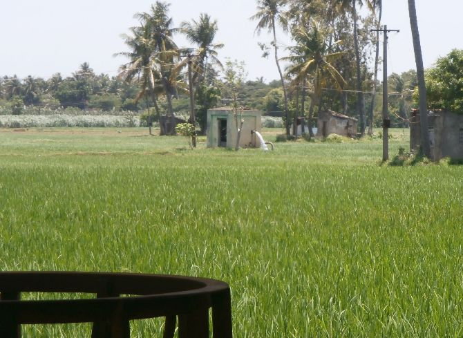Borewell farming in the Cauvery delta