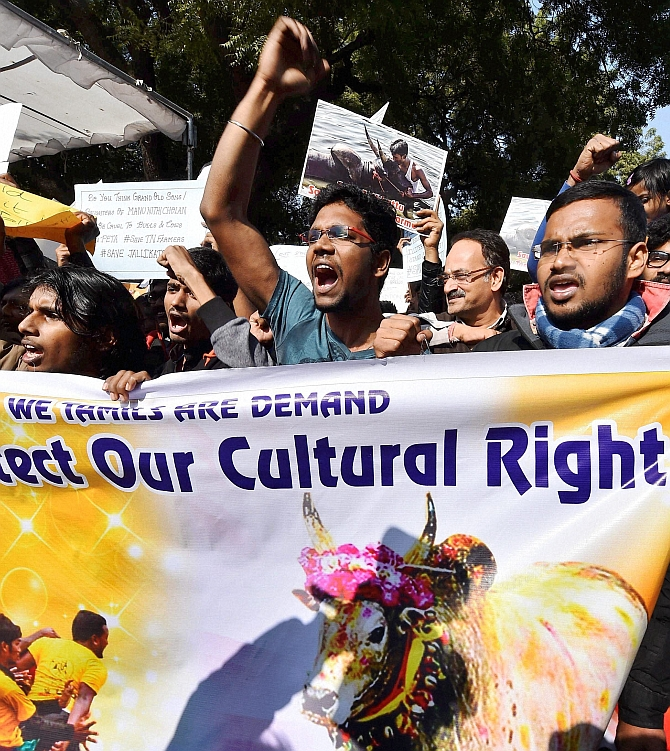 India News - Latest World & Political News - Current News Headlines in India - Jallikattu: 'Tamil rights, not pride, have been hurt'
