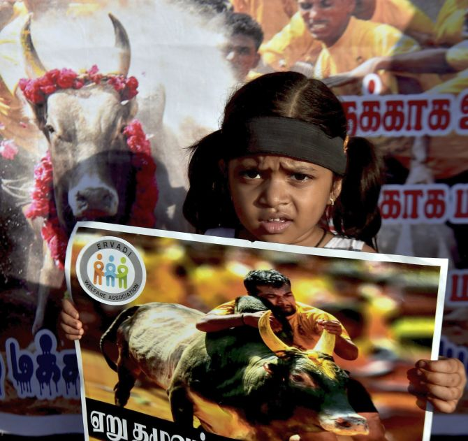 India News - Latest World & Political News - Current News Headlines in India - Jallikattu held in shadow of protests in Tamil Nadu, 3 dead
