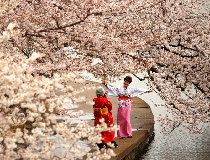 India News - Latest World & Political News - Current News Headlines in India - With cherry blossoms in bloom, Washington is the place to see