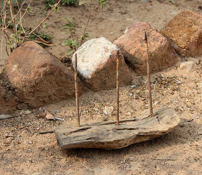 A lethal contraption devised by the Maoists: A three-nailed spike