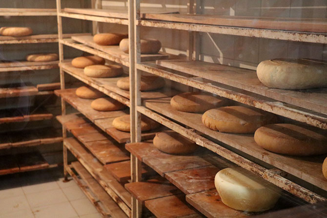 Cheese made by Tina Khan at Acres Wild