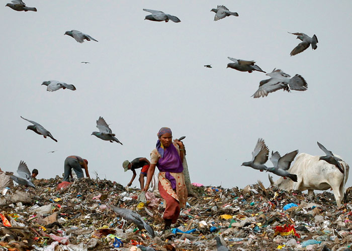 Pigeons fly overhead as a woman collects recyclables from a dump yard in New Delhi June 16, 2011. Photo: Adnan Abidi/Reuters