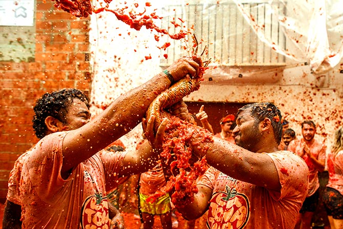 India News - Latest World & Political News - Current News Headlines in India - PHOTOS: The great tomato war!