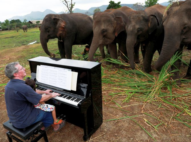 PHOTOS: Meet the pianist for elephants
