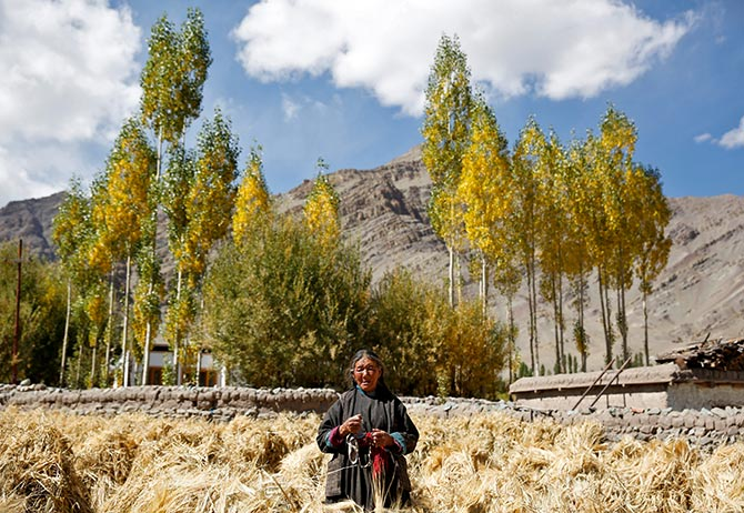 Tashi Phutit, 81, a wheat farmer and housewife poses for a photograph in the village of Stok, 15 km from Leh