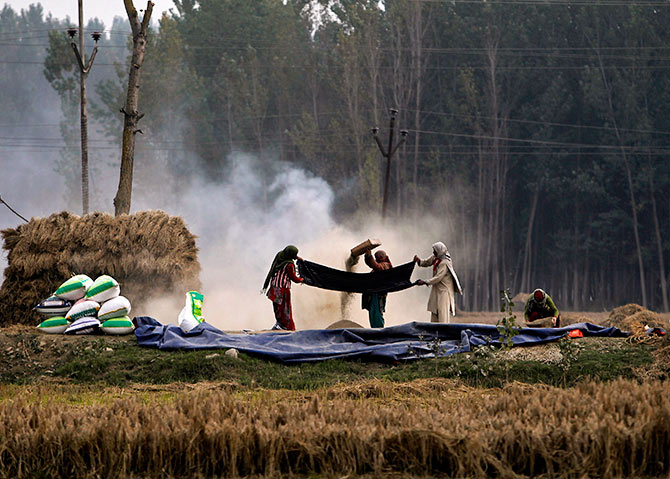 Kashmiri farmers winnow paddy during harvesting season in Srinagar October 13, 2014. Photograph: Danish Ismail/Reuters