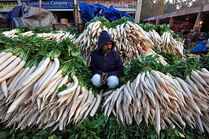 A vendor sits amidst heaps of radishes as he waits for customers at a wholesale vegetable market in Chandigarh, India, November 16, 2016. Photo: Ajay Verma/Reuters
