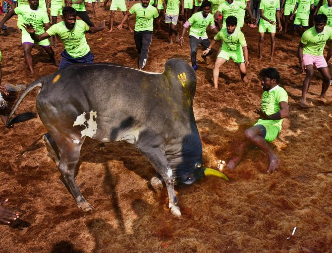 India News - Latest World & Political News - Current News Headlines in India - Jallikattu spectator gored to death in Madurai