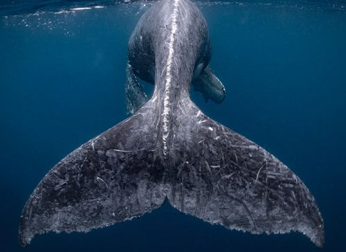 India News - Latest World & Political News - Current News Headlines in India - 'A whale of a time': Nat Geo Travel Photographer winners