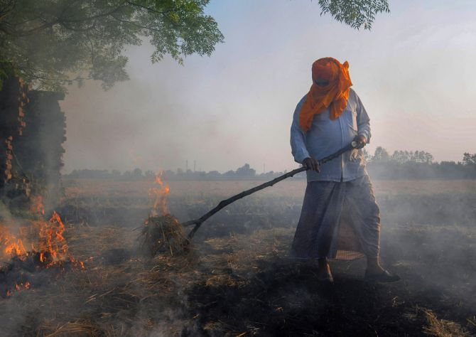 India News - Latest World & Political News - Current News Headlines in India - Why Punjab, Haryana farmers are defying ban on stubble burning