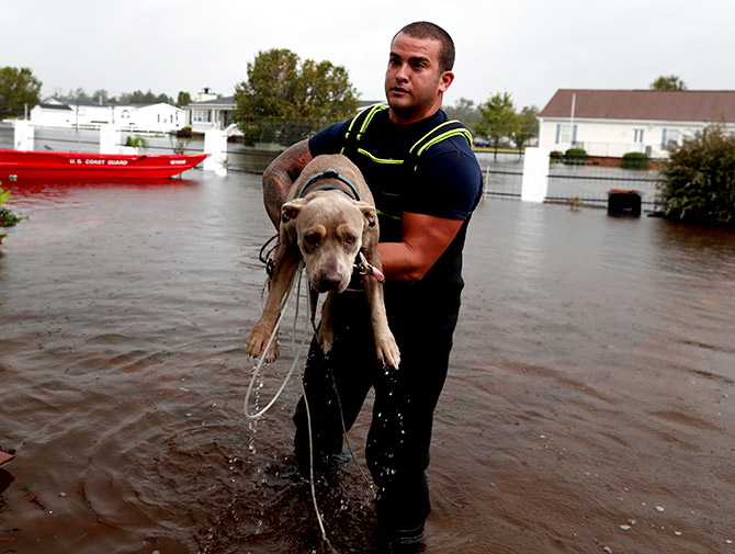 India News - Latest World & Political News - Current News Headlines in India - Good Samaritans work to rescue animals from Hurricane Florence