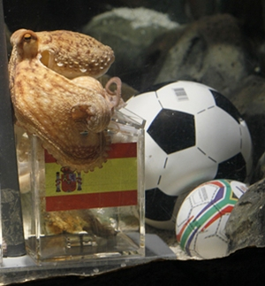 Octopus Paul predicts Spain will win Cup final