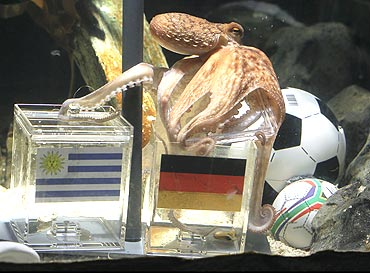 Octopus Paul picks Germany over Uruguay