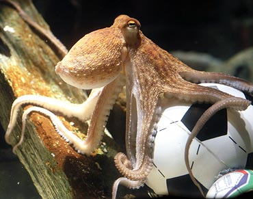 Spain, Germany in transfer tussle for Octopus Paul