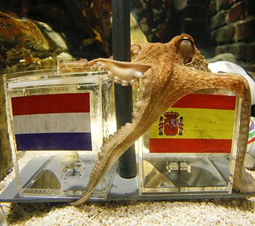 Paul the oracle octopus