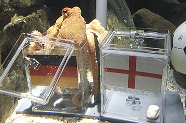 Paul, the octopus had predicted Germany's victory over England
