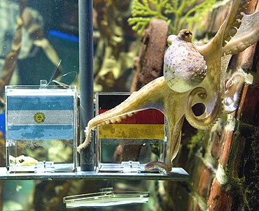 Paul, the octopus predicts Germany's victory over Argentina