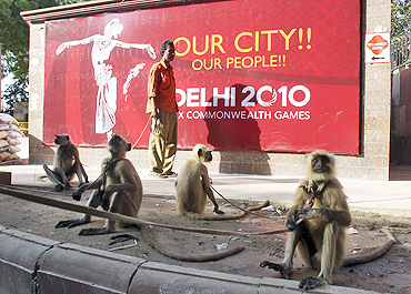 Langur monkeys sit on a pavement near Major Dhyan Chand National Stadium in New Delhi