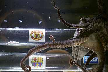 An octopus named Iker predicts Manchester United's victory against Barcelona in their Champions League final