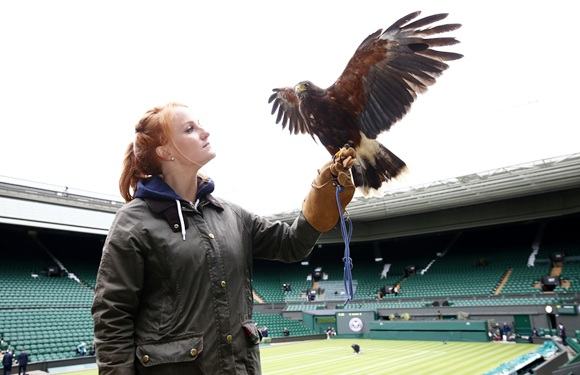 Imogen Davis poses for a photograph with Rufus, a Harris Hawk used at the Wimbledon to scare away pigeons