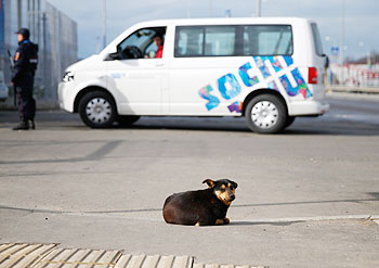 A dog sits outside a vehicle security checkpoint ahead of the Sochi 2014 Winter Olympics near the Olympic Park in Sochi on Wednesday