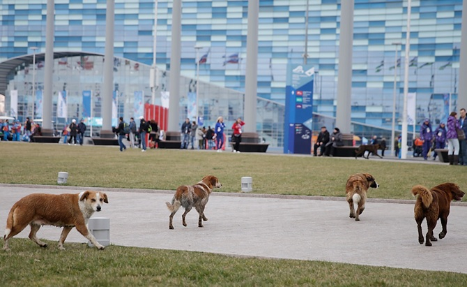 Stray dogs roam the grounds of the Olympic Park.