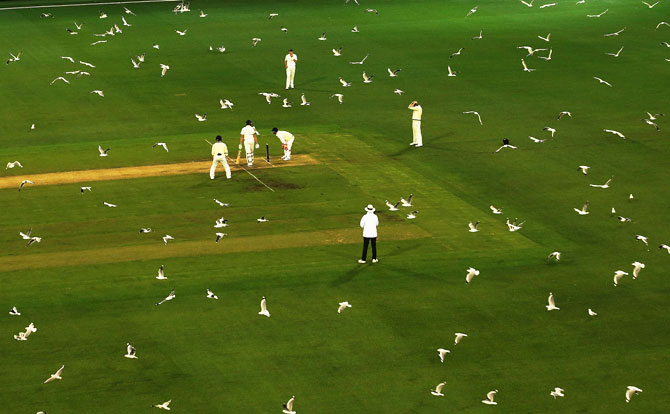 Hundreds of seagulls fly over the pitch as Tasmania bat during Day 2 of the Sheffield Shield match against Victoria at the Melbourne Cricket Ground in Melbourne, Australia, on October 26