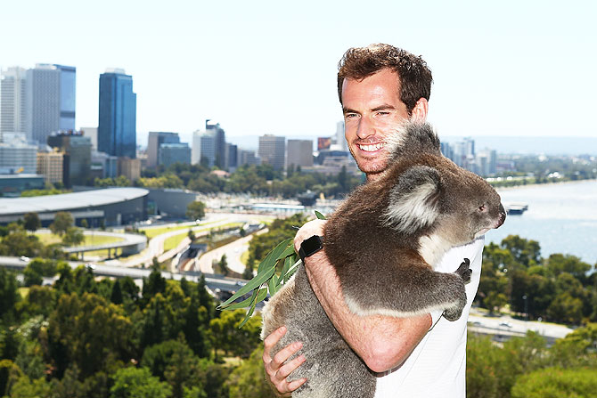 Great Britain's Andy Murray poses with Sunshine the Koala at Kings Park in Perth, on December 31, 2015