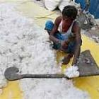 Cotton export to Bangladesh may hit 13.5 mn bales