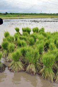 Paddy MSP hiked by Rs 72 to Rs 1,940/qtl for 2021-22