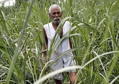 Why Rahul is wrong about the Indian farmer