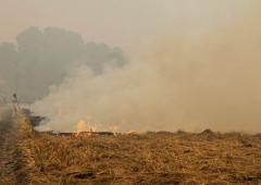 We are helpless: Punjab farmers on stubble burning