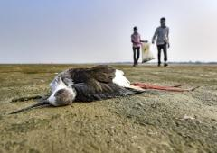PIX: Thousands of birds mysteriously die in Rajasthan