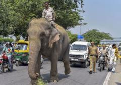 Missing Delhi elephant, found after 2 months