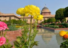 PIX: Buds are blooming at Rashtrapati Bhavan