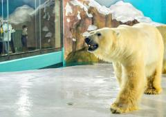 Chinese polar bear hotel opens to outrage
