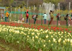 PHOTOS: Asia's largest tulip garden in Kashmir opens