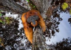 Go ape for these amazing wildlife photos!