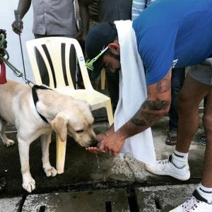 PHOTOS: Dog lover Kohli comes to the fore in Chennai