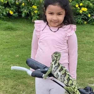 Ziva Dhoni's cute encounter with a chameleon