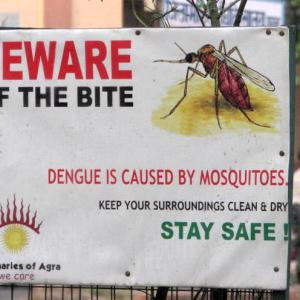 Dengue: Myths and facts