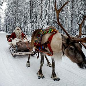 Reindeer at work: It's Christmas after all