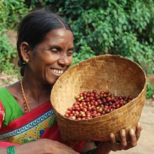 How Paris fell in love with coffee grown by Andhra tribals