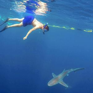 Swim with sharks; kayak with crocodiles: 5 adventures to try this summer