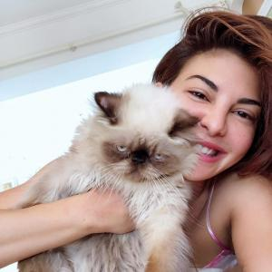 Have you met Jacqueline and Aliaa's cats?